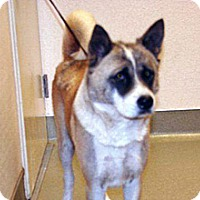 Adopt A Pet :: Quetzaly - Wildomar, CA
