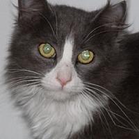 Adopt A Pet :: Arthur - Savannah, MO