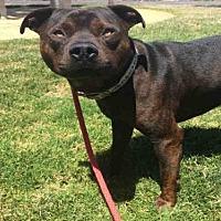 Adopt A Pet :: PALMER - Alameda, CA