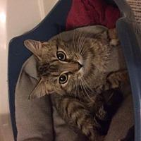 Adopt A Pet :: Emily - Bardstown, KY