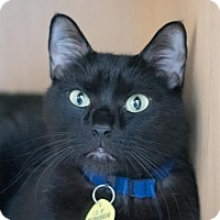 Adopt A Pet :: Otto - Chico, CA