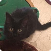 Adopt A Pet :: Ziggy - Denver, CO