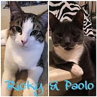 Adopt A Pet :: Ricky & Paolo - Whitehall, PA
