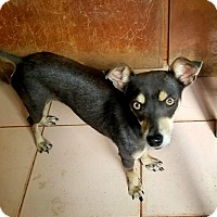 Adopt A Pet :: Flora - Osseo, MN