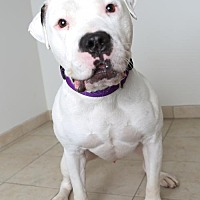 Adopt A Pet :: Clem D171443 - Eden Prairie, MN