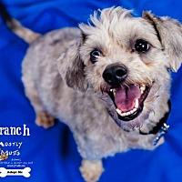 Adopt A Pet :: Branch - Kennesaw, GA
