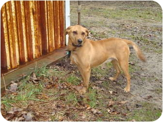 Hound (Unknown Type) Mix Dog for adoption in Hermitage, Pennsylvania - Spike