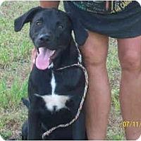Adopt A Pet :: Renae - Wakefield, RI