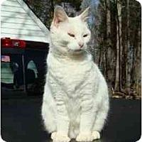 Adopt A Pet :: Snowball - Richmond, VA