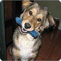 Adopt A Pet :: Phoebe - BC Wide, BC