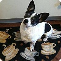 Adopt A Pet :: Gus - Mt Gretna, PA