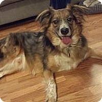 Adopt A Pet :: Jack - Washington, IL