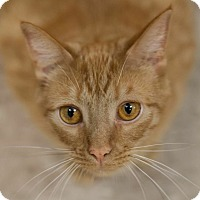 Adopt A Pet :: Theo - Byron Center, MI