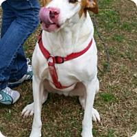 Adopt A Pet :: Ralph - Conway, AR