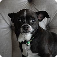 Adopt A Pet :: Dot - Milan, NY