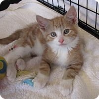 Adopt A Pet :: Harvey - bloomfield, NJ
