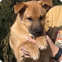 Adopt A Pet :: Ernie - this boy is too cute - Pewaukee, WI