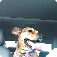 Adopt A Pet :: Snickers - Oviedo, FL