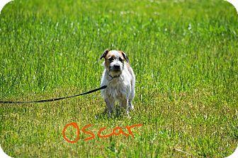 Terrier (Unknown Type, Small) Mix Dog for adoption in Lebanon, Missouri - Oscar