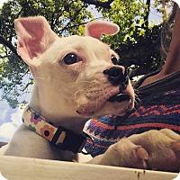 Adopt A Pet :: Beatrix - Tallahassee, FL
