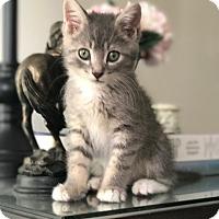 Adopt A Pet :: Tyres - Yorba Linda, CA
