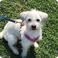 Adopt A Pet :: Harper - West LA, CA
