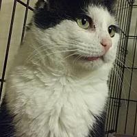 Adopt A Pet :: 1Sebastian - Delmont, PA