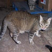 Adopt A Pet :: Rango - Ravenel, SC