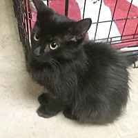 Adopt A Pet :: Sophie - wyoming valley, PA