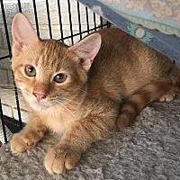 Adopt A Pet :: Oscar - Metairie, LA