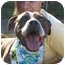 Photo 1 - American Staffordshire Terrier/American Pit Bull Terrier Mix Dog for adoption in San Pedro, California - Happy