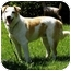 Photo 2 - Jack Russell Terrier/Australian Cattle Dog Mix Dog for adoption in Bellevue, Nebraska - Red Dog