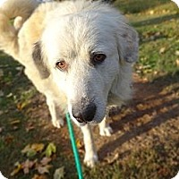 Adopt A Pet :: Hopson - Brattleboro, VT