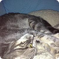 Adopt A Pet :: Kanga - Farmingdale, NY