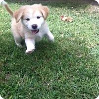 Adopt A Pet :: Sugar - Cathedral City, CA
