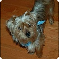Adopt A Pet :: Brooklyn - Charlotte, NC