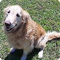 Adopt A Pet :: Moe - Murdock, FL