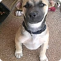 Adopt A Pet :: Louise - Childress, TX