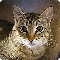 Adopt A Pet :: Barnie - Bulverde, TX