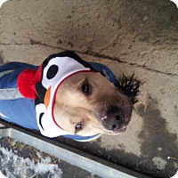Adopt A Pet :: Mojo - Cumberland, MD