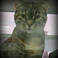 Adopt A Pet :: Geniva - tama, IA