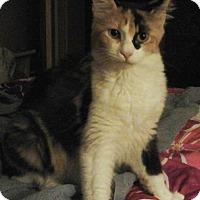 Adopt A Pet :: Serafina - Farmington, AR