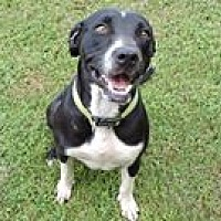 Adopt A Pet :: Wendy - Cottonport, LA