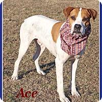 Adopt A Pet :: Ace - Hillsboro, TX