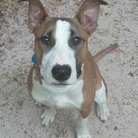 Adopt A Pet :: Casey - Wenonah, NJ