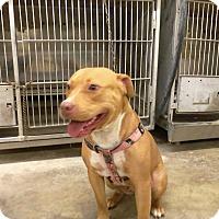 Adopt A Pet :: BUTTERCUP - Upper Sandusky, OH