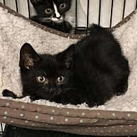Adopt A Pet :: Gandolf - East Brunswick, NJ