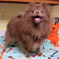 Adopt A Pet :: Teddy - 9 lbs - Dahlgren, VA