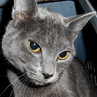 Adopt A Pet :: Bambi - Chattanooga, TN