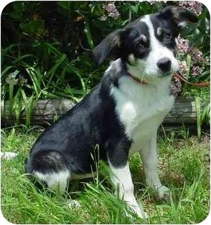 Retriever (Unknown Type) Mix Puppy for adoption in Brenham, Texas - Sadie